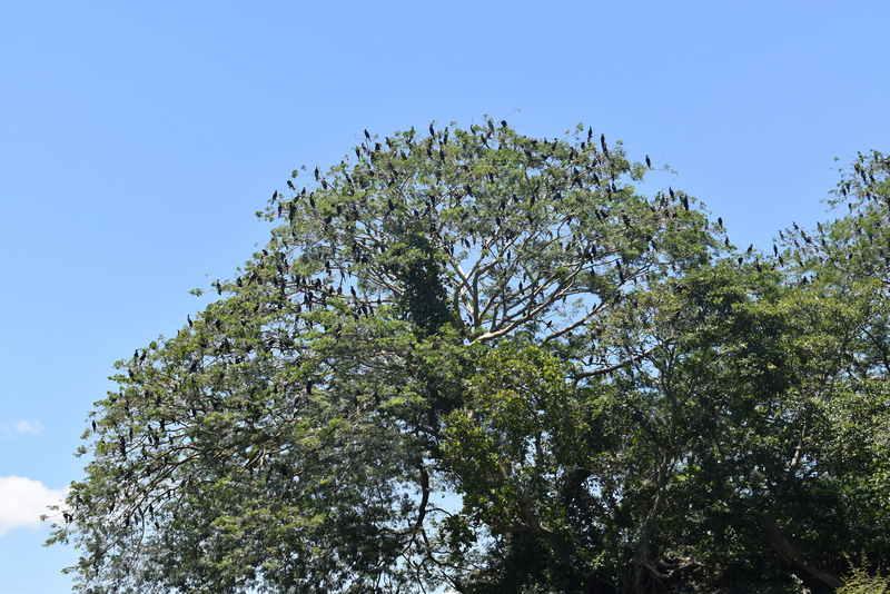 01Reforestación