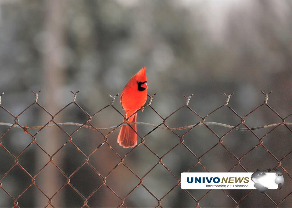 pájaros (1)