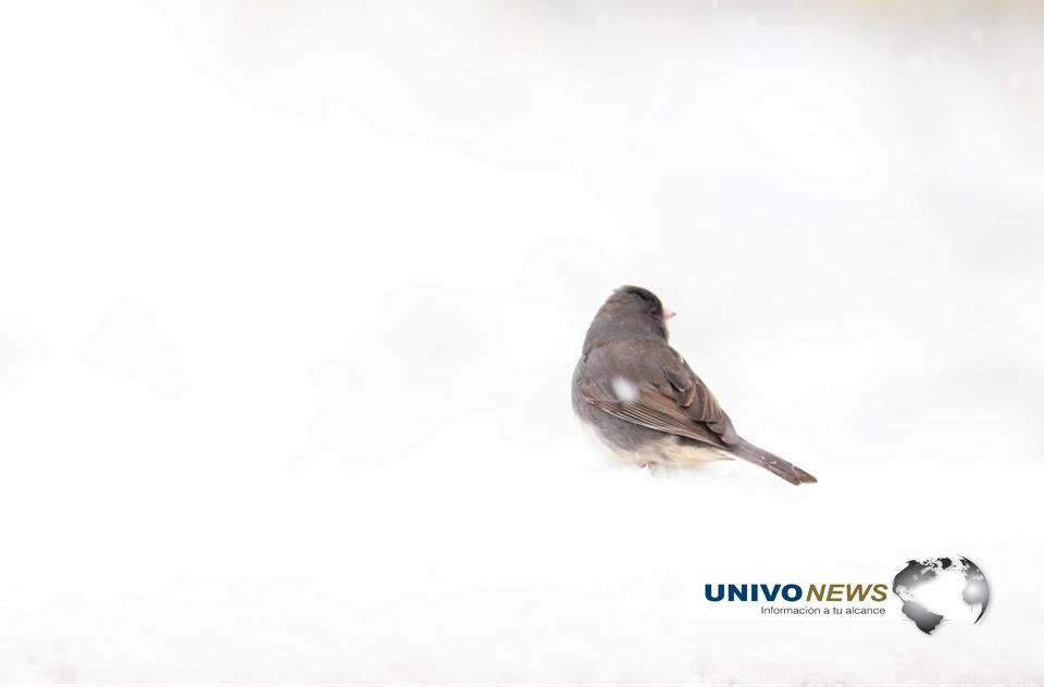 pájaros (3)