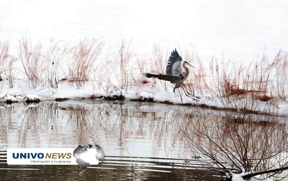 pájaros (5)