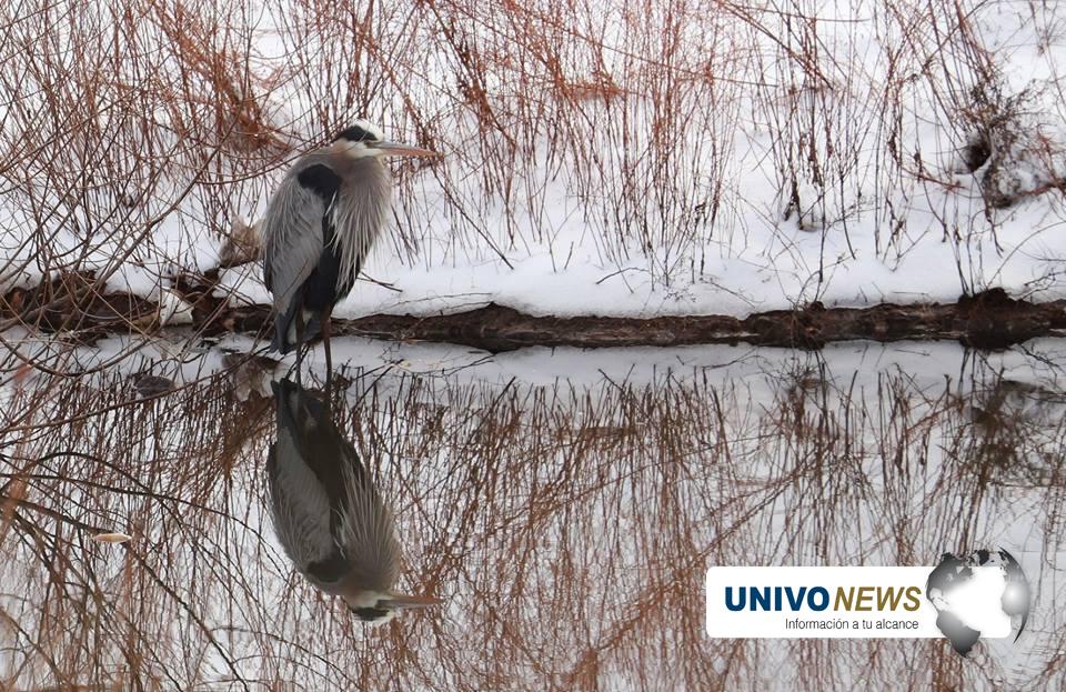 Aves en la nieve