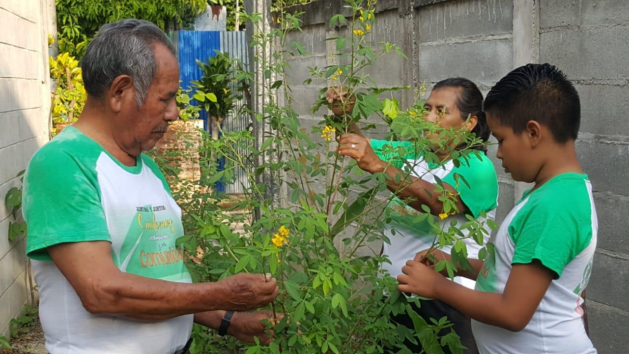 La agroecología urbana: alimentos sanos, económicos y de cambios sociales