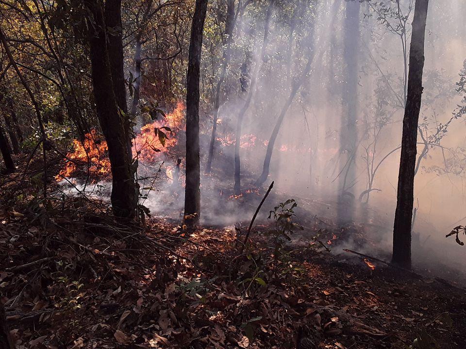 """""""Se corre el riesgo que las reservas hídricas se sequen debido a los incendios"""""""