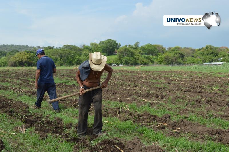 Países deben apostar a la Agricultura Familiar