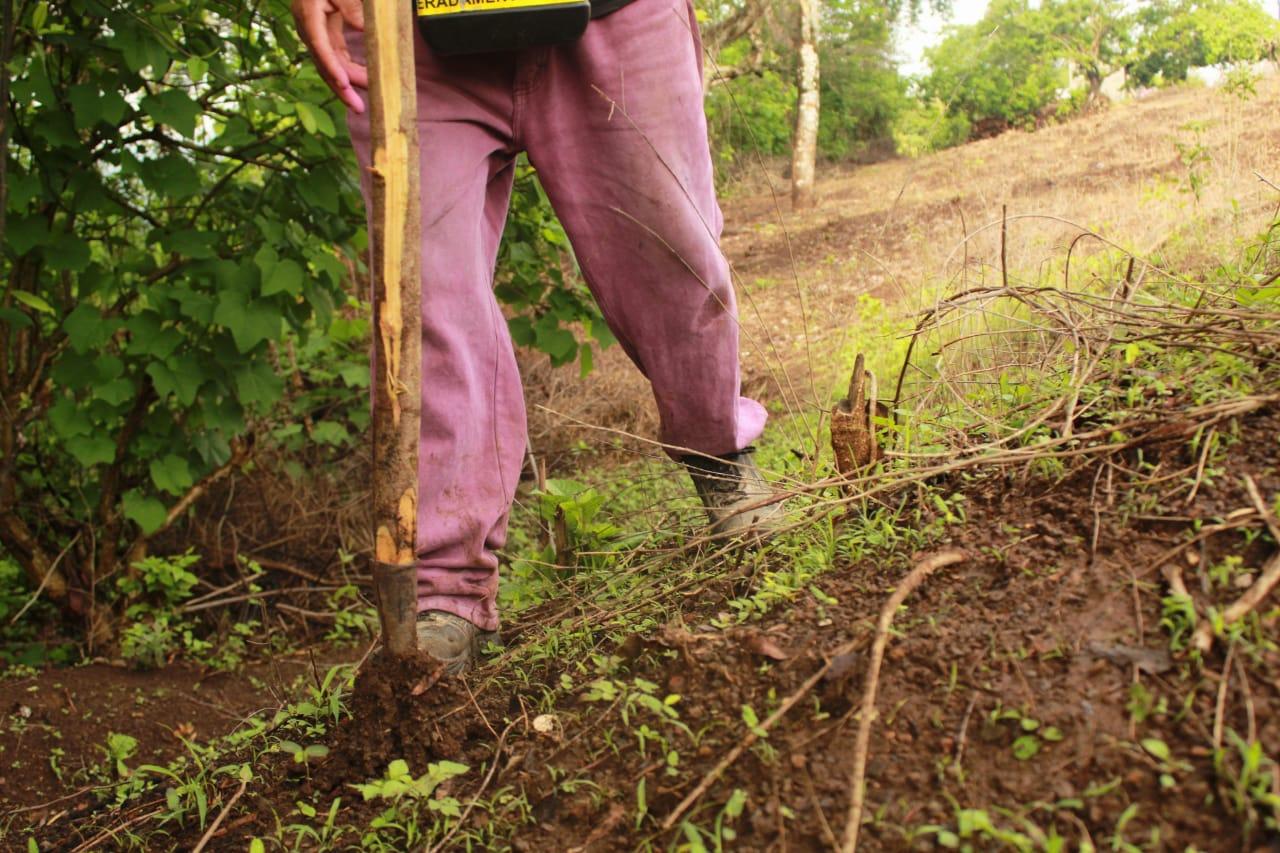 Photo of Campesinos empiezan a sembrar con las primeras lluvias