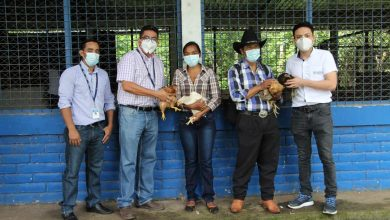Photo of UNIVO entrega aves de corral a familias en Nueva Guadalupe