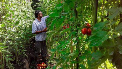 Photo of El primo Will dejó las cámaras para dedicarse a cultivar hortalizas