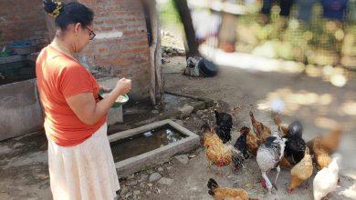 Photo of Familias aprenden a producir alimentos y a cuidar el medioambiente