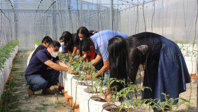 Photo of Estudiantes desarrollan un invernadero en Chilanga