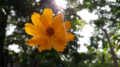 Photo of La magia de las flores