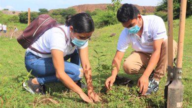 Photo of Estudiantes UNIVO reforestaron en cantón Miraflores