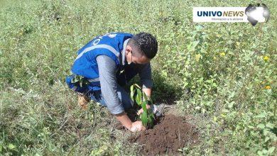 Photo of La UNIVO realizó reforestación de zona verde en Cantón Miraflores